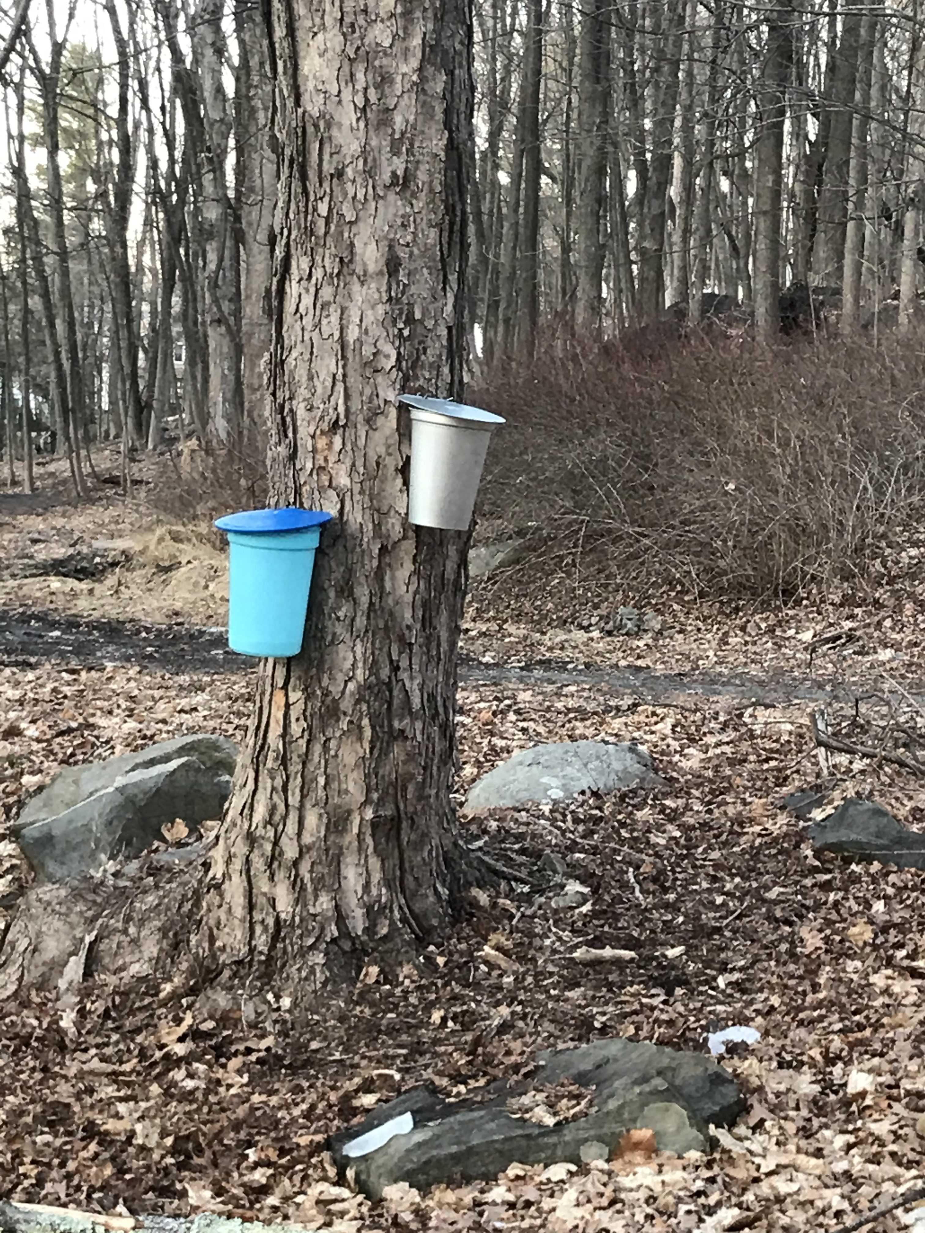 Sugar 2 buckets one blue