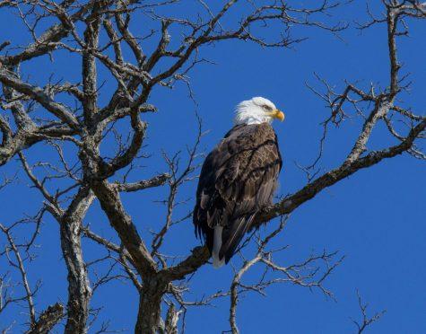Eagle Eyed Daughter Shares Her Dad