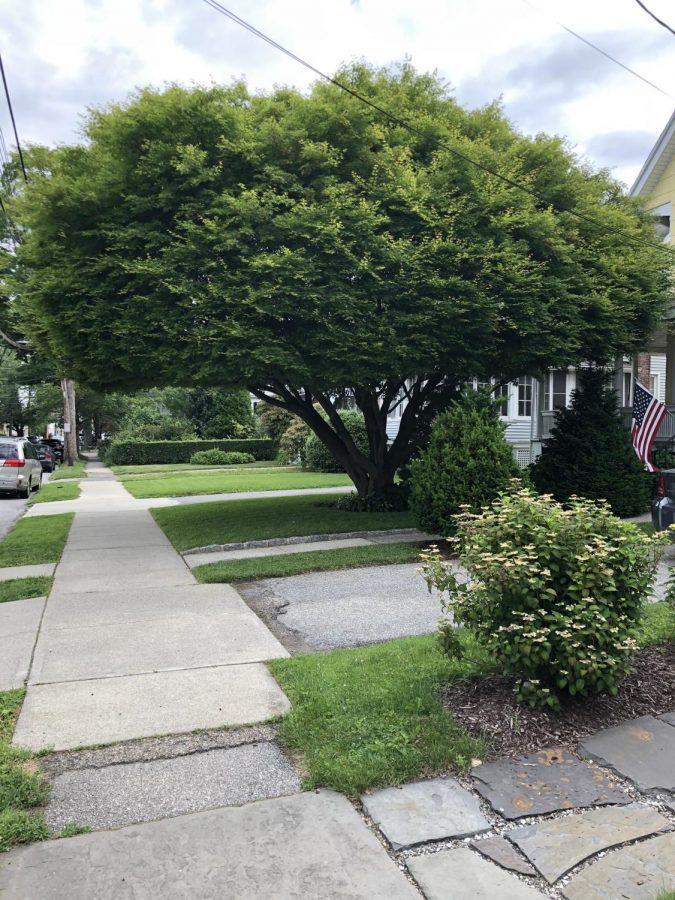 City Council Talks Trees