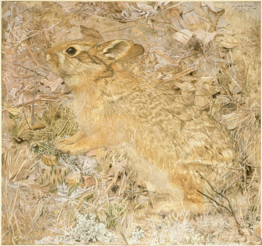 Brooklyn_Museum_-_The_Cotton-Tail_Rabbit_among_Dry_Grasses_and_Leaves_